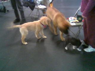 Serra puppy class 1