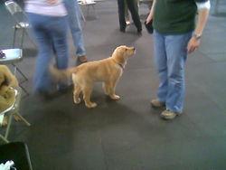 Serra puppy class 2